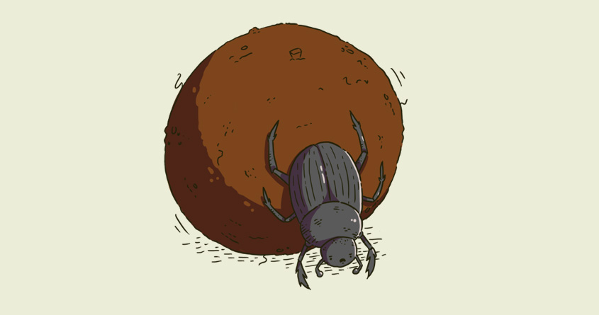 Wise Dung Beetle